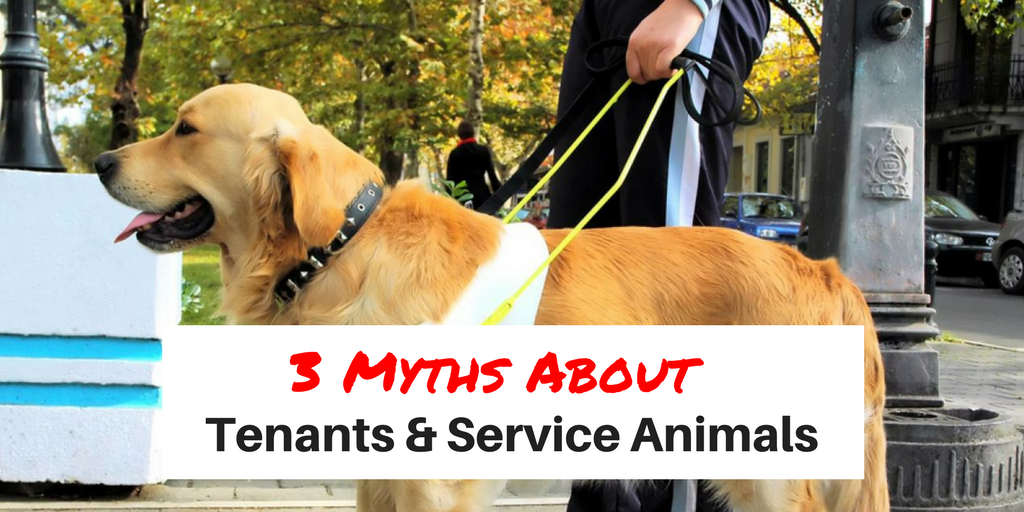 3 Myths About Tenants & Service Animals